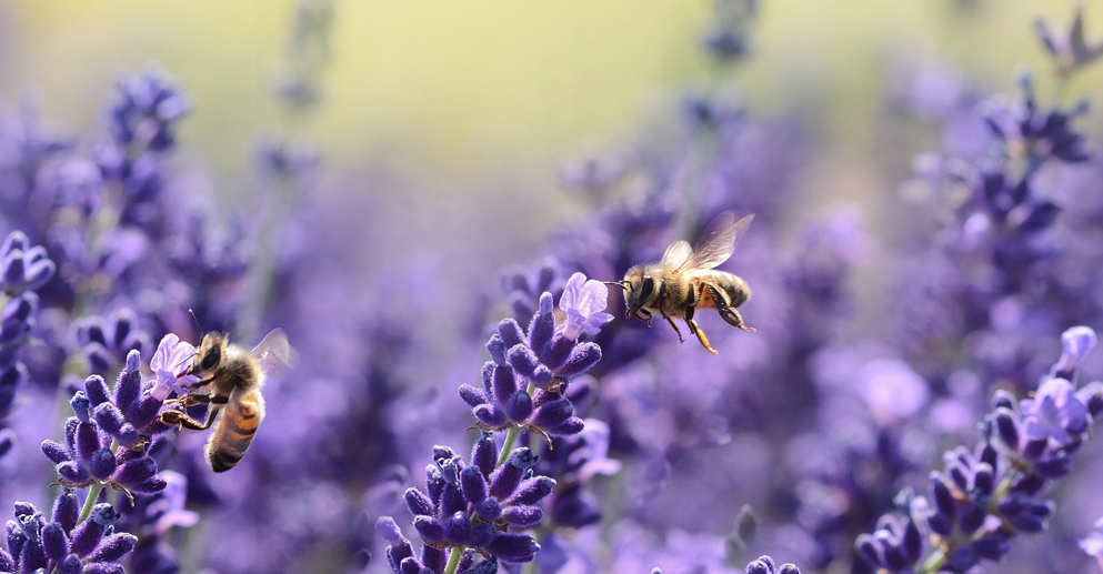 Pollinator Month | Fairmont Chateau Whistler, Sweet Treats, Savings and Social Responsibility